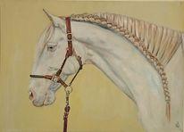 Schimmel, Andalusier, Pferdekopf, Pferde