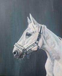 Pferde, Schimmel, Pferdekopf, Portrait