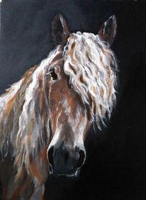 Kaltblut, Pferde, Portrait, Haflinger
