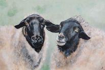 Wolle, Schaf, Portrait, Malerei