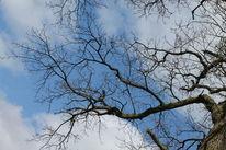 Baum, Himmel, Pflanzen, Fotografie