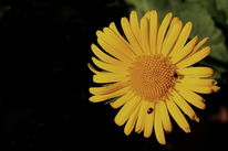 Blumen, Pflanzen, Garten, Natur