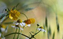Wildblumen natur, Fotografie