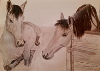 Apollo, Pferde, Weiß, Zeichnungen