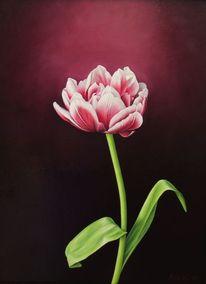 Stillleben, Ölmalerei, Blumen, Ein tulip