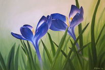Krokus, Blumen, Blüte, Frühling