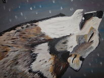 Kanada, Sibirien, Wildtiere, Mongolei