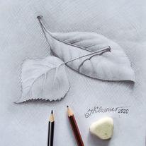 Blätter, Blumen, Herbst, Zeichnungen