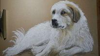 Herdenschutzhund, Pastellmalerei, Zeichnung, Zeichnungen