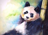 Bär, Panda, Aquarellmalerei, Bambus