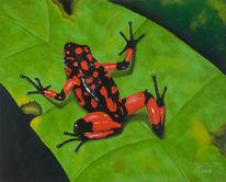 Amphibien, Prachtbaumsteiger, Wasser, Frosch