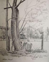 Odenwald, Wald, Wetter, Bleistiftzeichnung