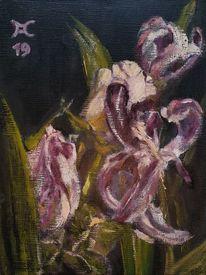 Violett, Tulpen, Rose, Welken