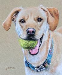 Hund, Pastellmalerei, Portrait, Labrador