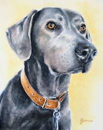 Hund, Tiere, Portrait, Malerei