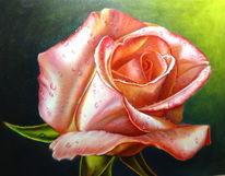 Flora, Rose, Blumen, Tropfen