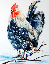 Aquarell, Tiere, Hahn