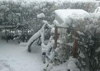 Fahrrad, Hecke, Holz, Schnee
