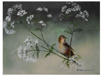 Weiße blüten, Blüte, Vogel, Sommer