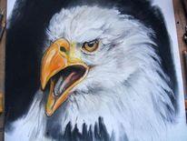 Adler, Augen, Pastellmalerei, Malerei