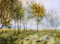 Natur, Diesig, Wiese, Schaf