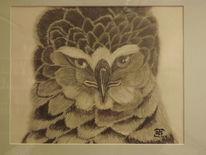 Kronenadler, Affenadler, Greif, Zeichnungen
