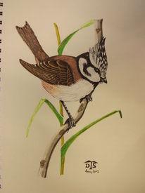 Singvogel, Vogel, Haubenmeise, Meise
