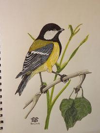 Singvogel, Vogel, Kohlmeise, Eurasian great tit