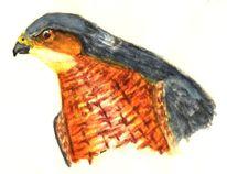 Vogel, Sperber, Sparrow hawk greifvogel, Greifvogel