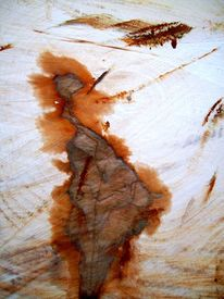 Ästhetik, Baum, Gefällte, Struktur