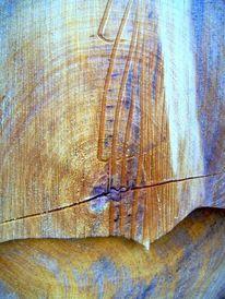 Struktur, Gefällte, Mit blaufäulnis, Baum