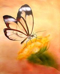 Tiere, Transparenz, Blumen, Braun