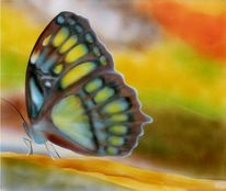 Braun, Schmetterling, Grün, Naturfarben