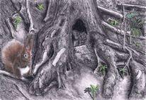 Eichhörnchen, Wald, Zeichnungen