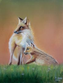 Fuchs, Tiere, Zeichnung, Natur