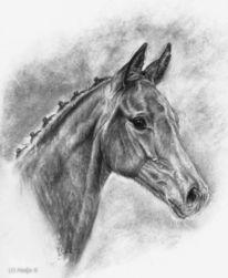 Kohlezeichnung, Tierportrait, Fohlen, Malerei