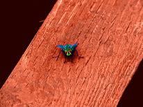 Fliege, Bein, Holz, Facettaugen