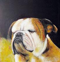 Bulldogge, Hund, Gelb weiss, Spachtel