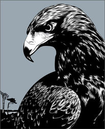 Adler, Schwarz, Illustrationen,