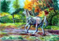 Pferde, Arabisch, Weide, Galopp