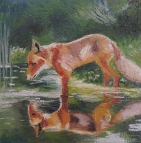 Teich, Wasser, Rotfuchs, Spiegelung
