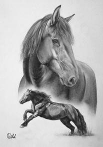 Stute, Reiten, Pferde, Bewegung