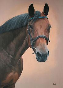 Portrait, Stute, Pferdekopf, Reiten