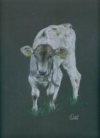 Gras, Rind, Zuchttier, Tiere