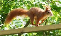 Schnell, Garten, Rennen, Eichhörnchen