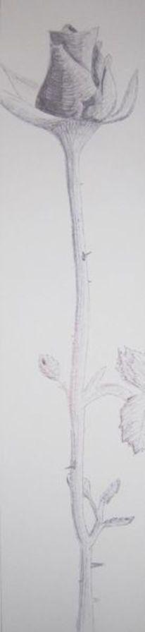 Schwarz, Rose, Kugelschreiber, Blüte