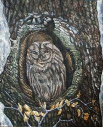 Baum, Eule auf baum, Gesicht, Eule