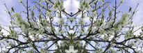 Frühling, Hellblau, Himmel, Blüte