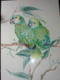 Vogel, Buntstiftzeichnung, Tiere, Malerei