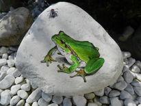 Amphibien, Fliege, Tiere, Frosch